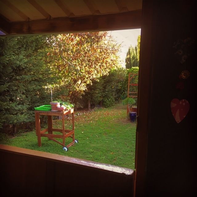 Looking out from the potting shed in autumn.