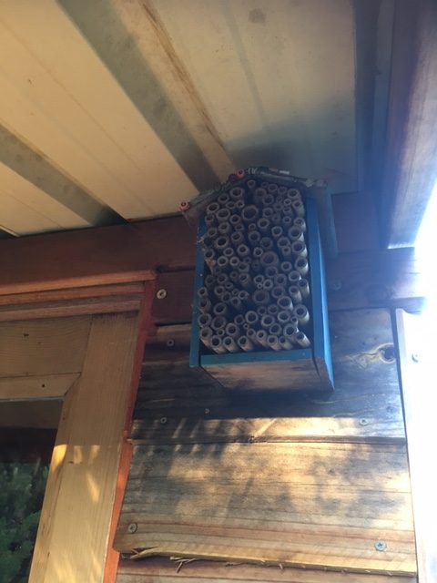 An insect hotel made from bamboo sticks, attached to the outside of the potting shed.